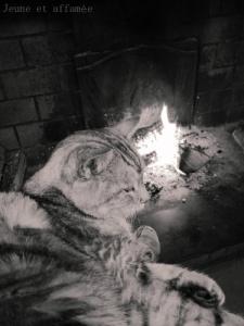 Le chat au coin du feu