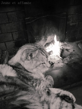 Le chat au coin du feu
