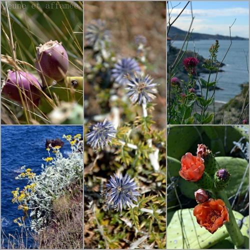 Flore Pyrénées Orientales