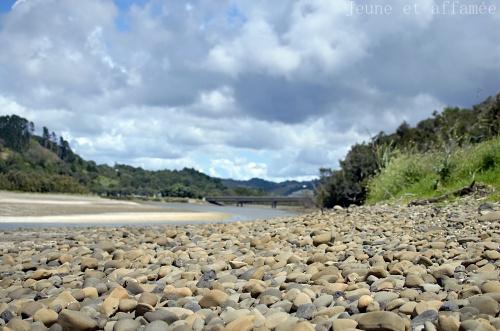 Wenderholm walk NZ