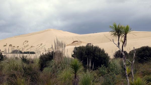 Te Paki sand dunes, Northland, New-Zealand
