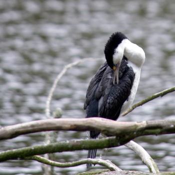 Réserve naturelle Zealandia, Wellington