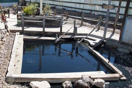 Les bassins de Ngawha Springs