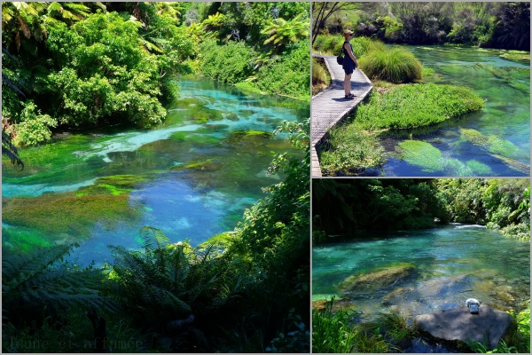 Blue Springs, North Island, New-Zealand
