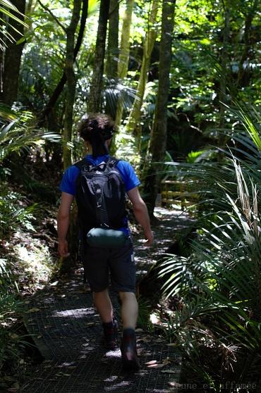 Sentier dans le bush