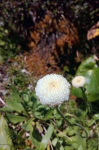 Flore NZ