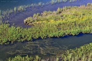 Plantes au bord des étangs de Bassiès