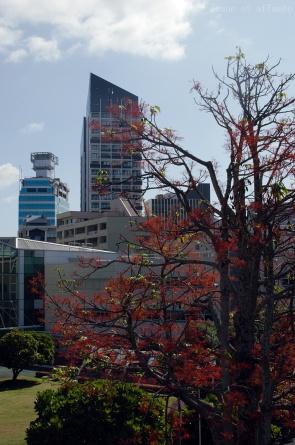 Vue du centre d'Auckland