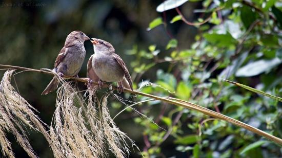 oiseaux se donnant la becquée