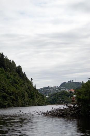 Zealandia, Wellington