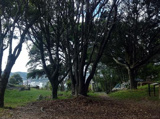 Raccourcis arborés entre les maisons à Wellington
