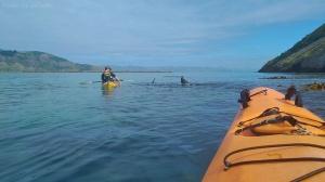 Sortie kayak, Otago peninsula