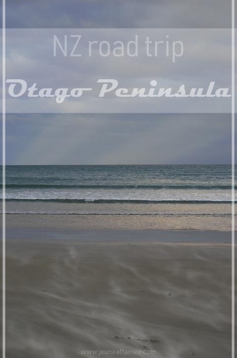 Road trip NZ : Otago Peninsula