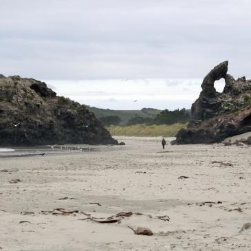 Plaga d'Aramoana, Otago peninsula